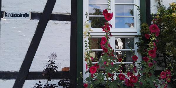 Altstadthaus (Fachwerk) mit Blumen vor dem Fenster in Warnemünde