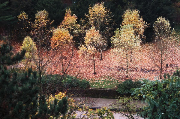 rot-gelbes Laub im Flußtal von Luxemburg