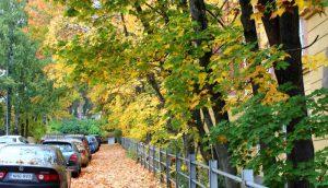 Blick auf Straße mit buntem Laub