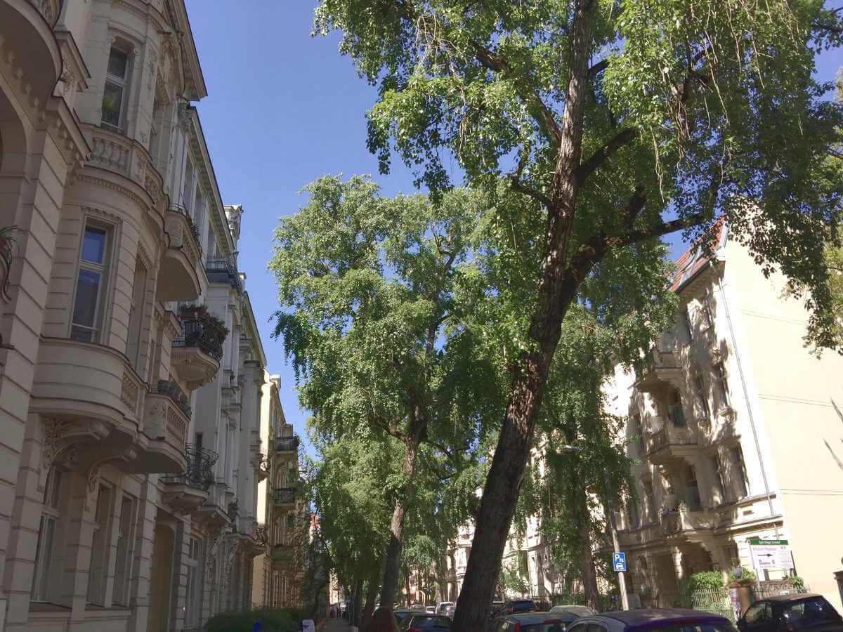 Straßenzug mit alten Häusern mit gepflegten Fassanden, Bäume zäumen Straßenverlauf