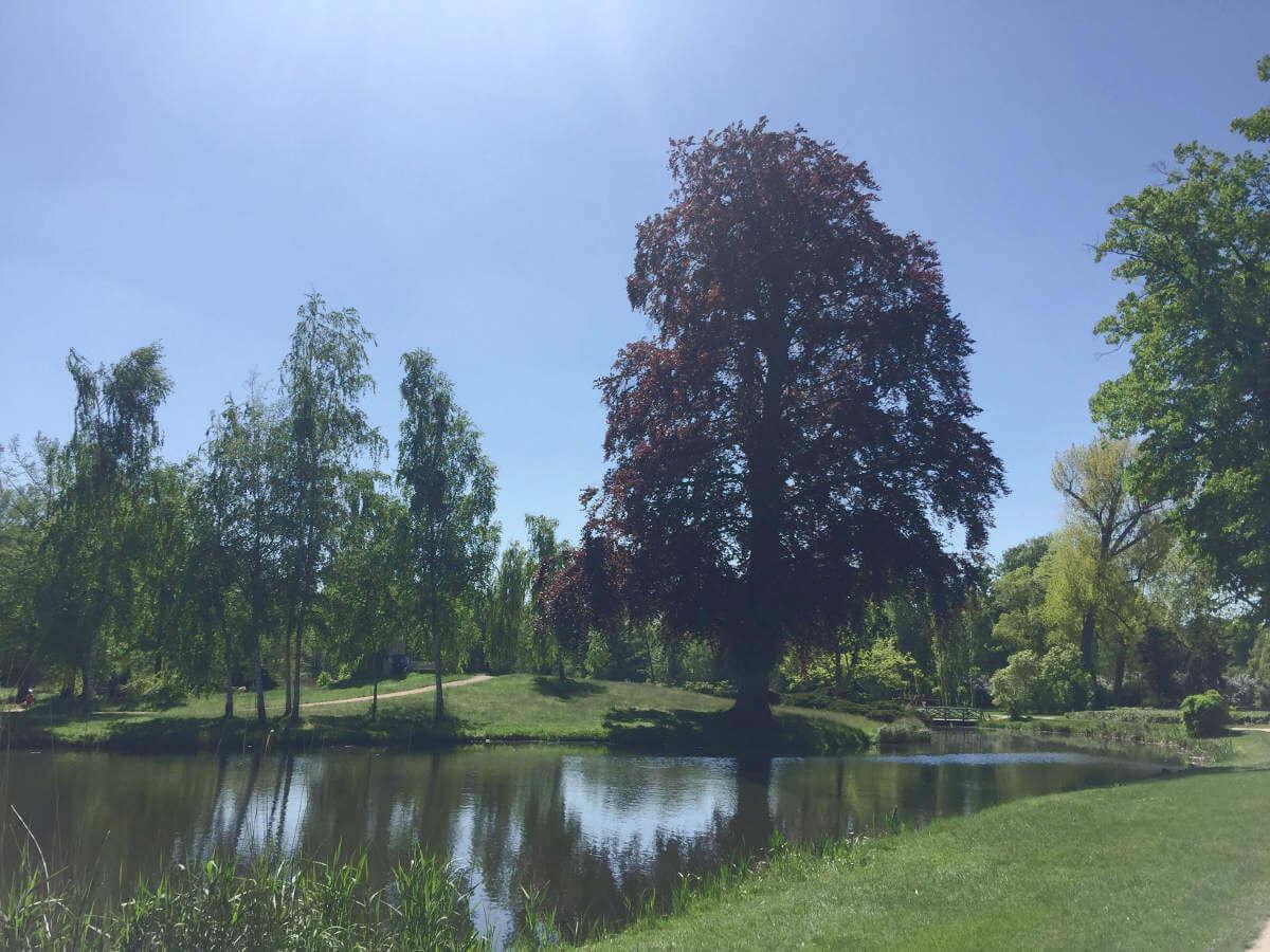 Teich mit Bäumen im Park Sanssouci in Potsdam, Brandenburg