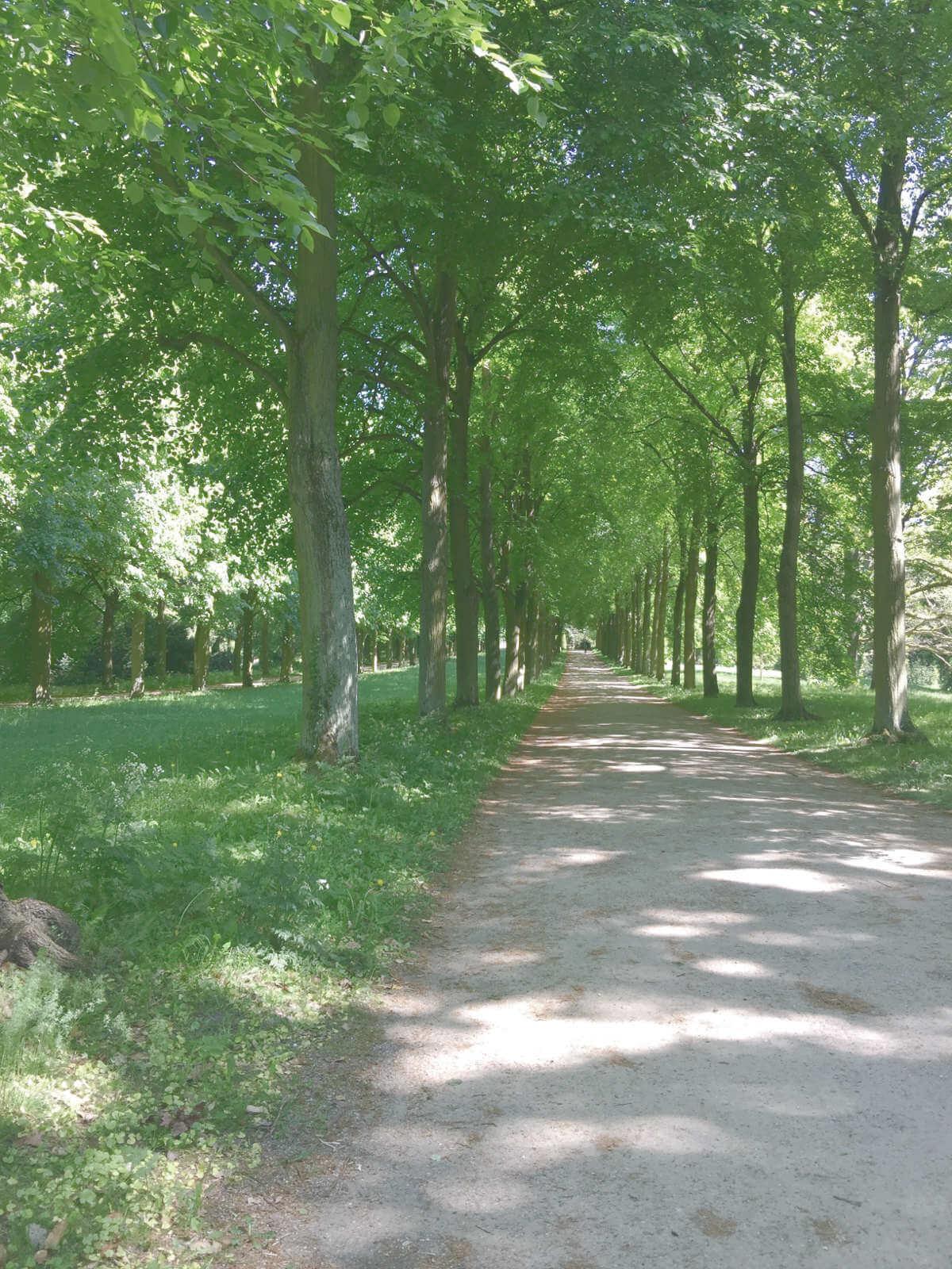 Allee mit Bäumen gezäunt im Park Sanssouci in Potsdam, Brandenburg