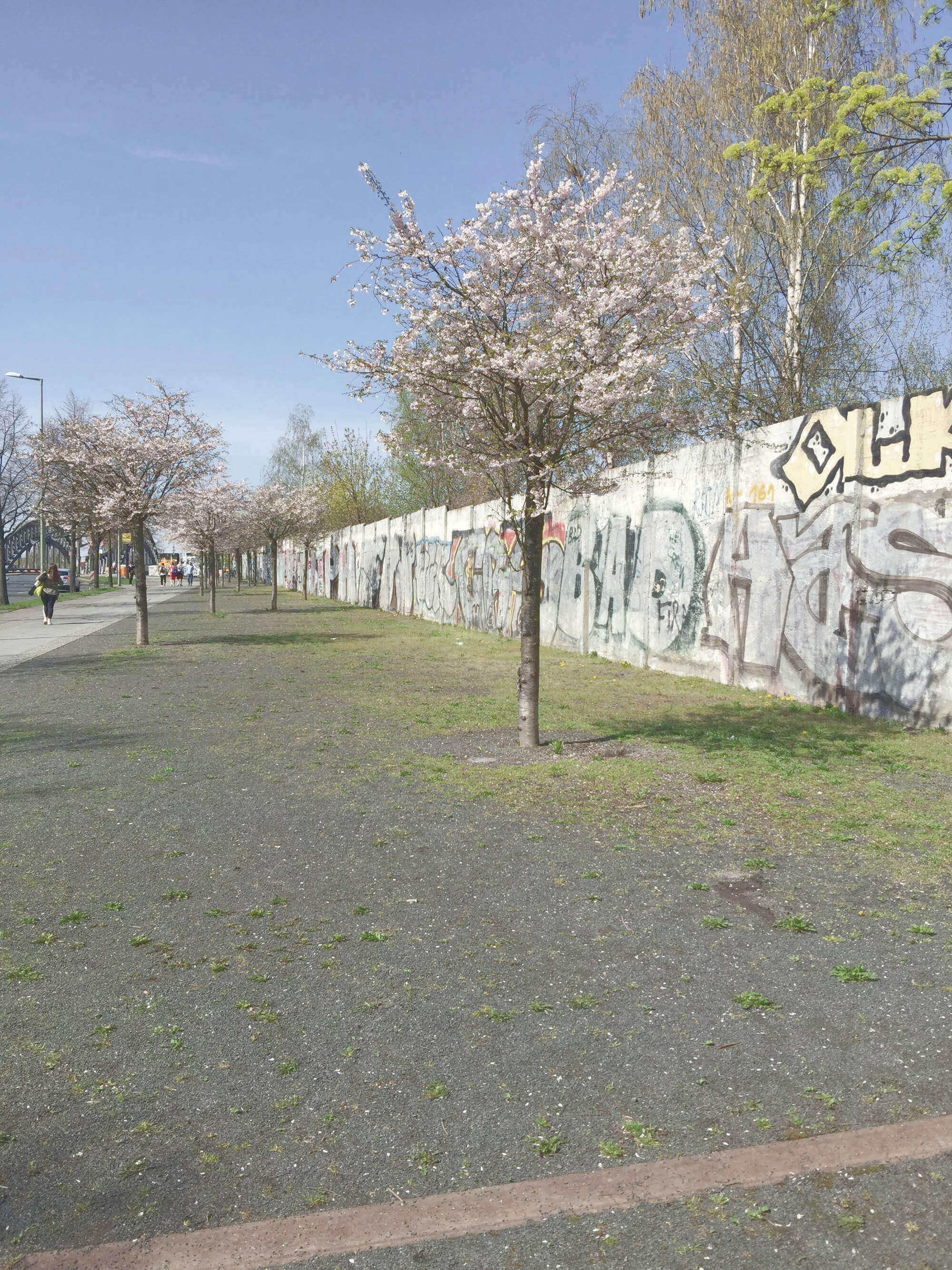 blühender Kirschbaum vor Berliner Mauer