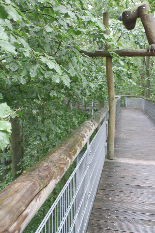 Baumkronenpfad im Nationalpark Hainich in Thüringen