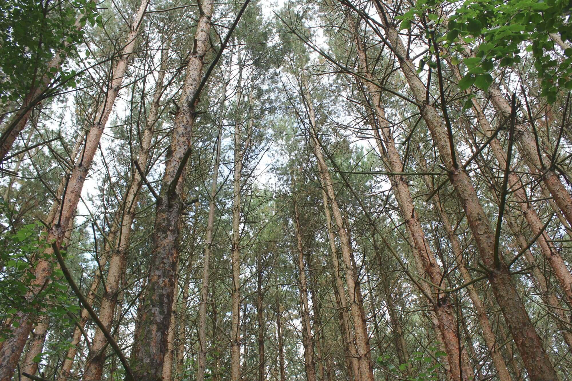 Baumlabyrint am Feensteig im Nationalpark Hainich