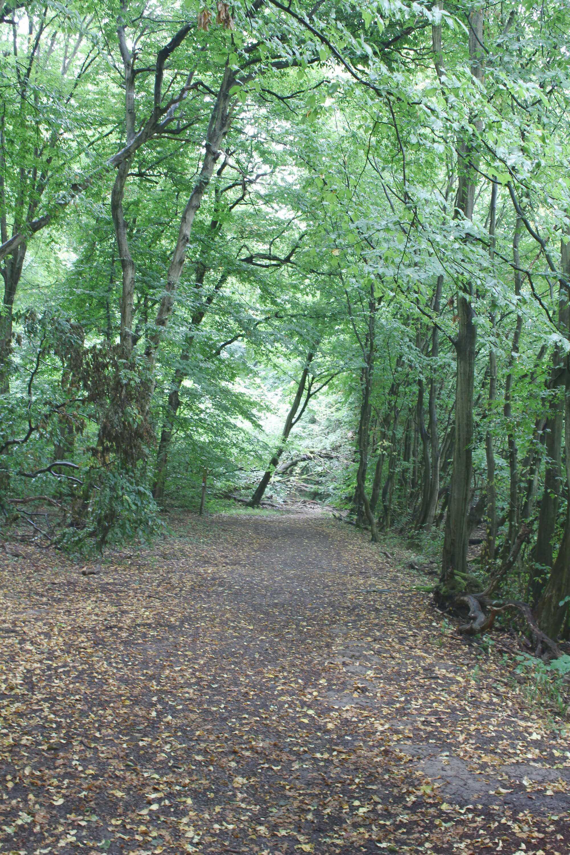 Wald des Nationalparks Hainich in Thüringen