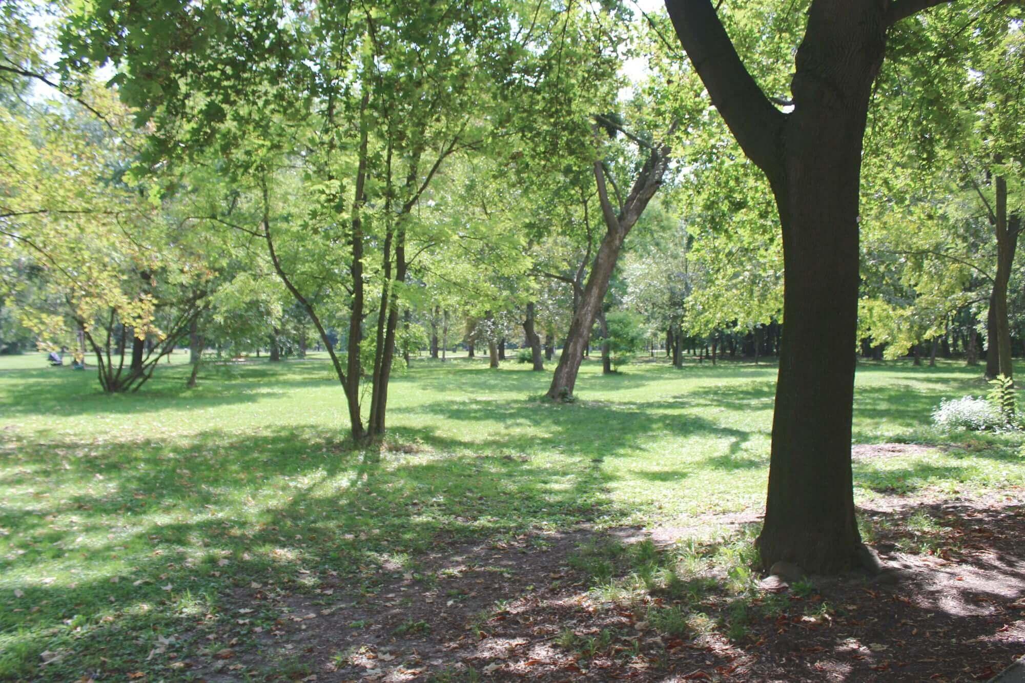 Park mit viel Grün und Bäumen in Wien