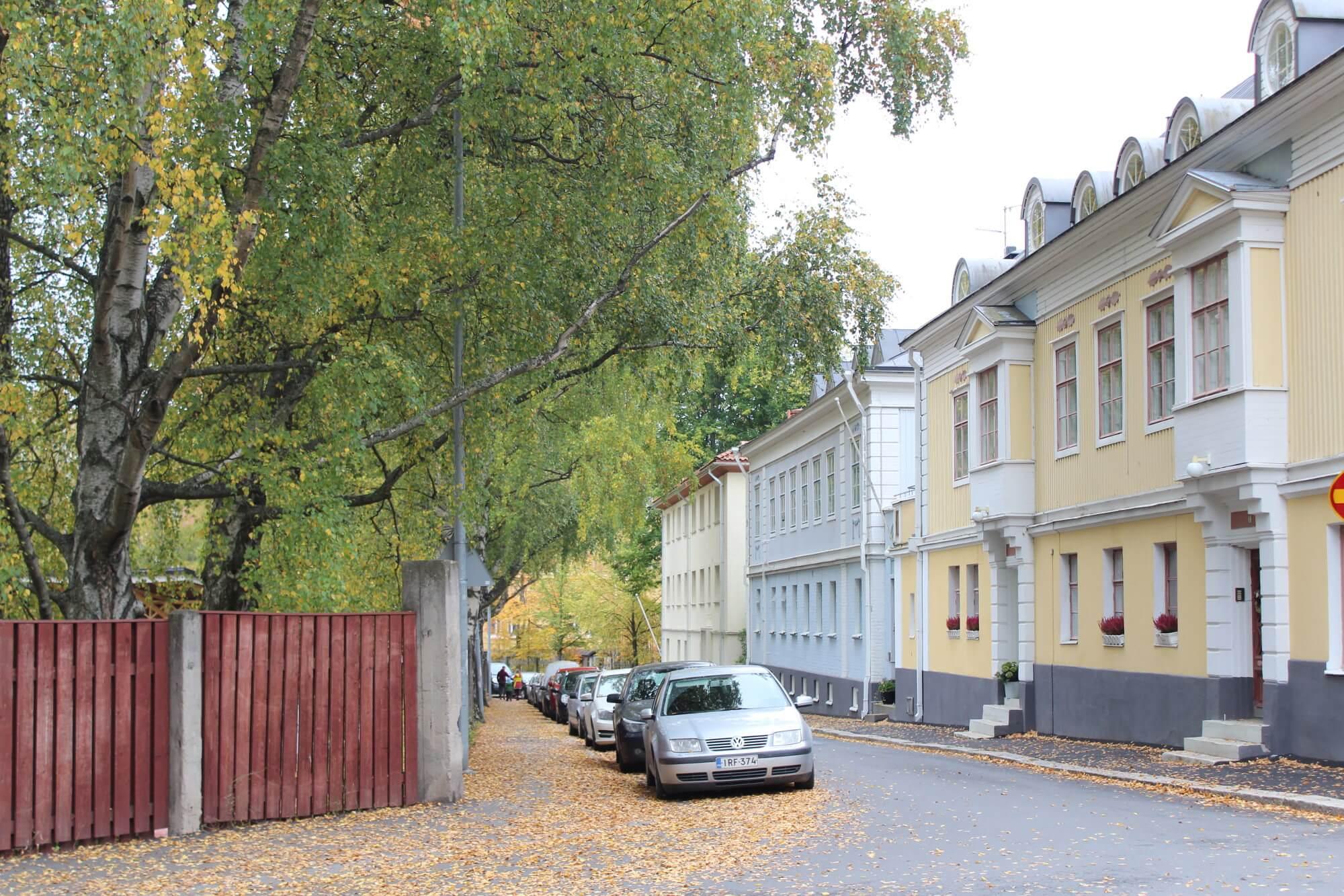 Herbst-Freude: buntes Laub