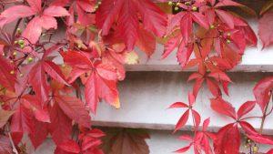 Herbst-Freude