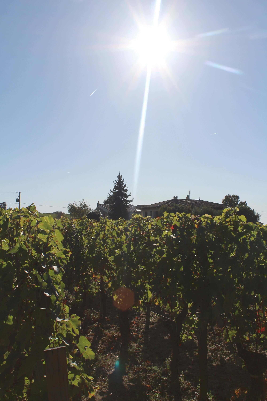 Ausflug ab Bordeaux: Weingut besichtigen