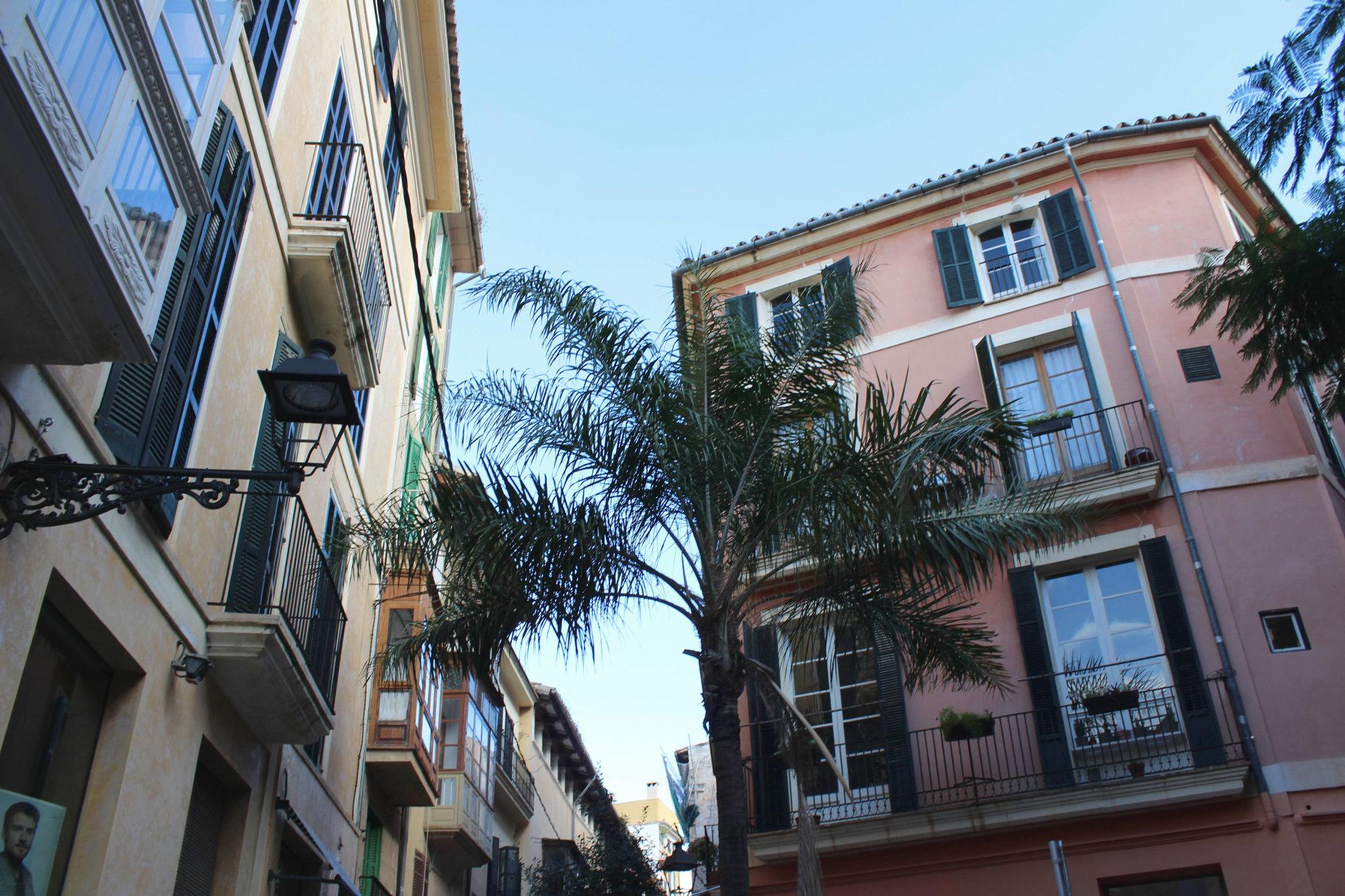 Palme in Straßen von Palma de Mallorca