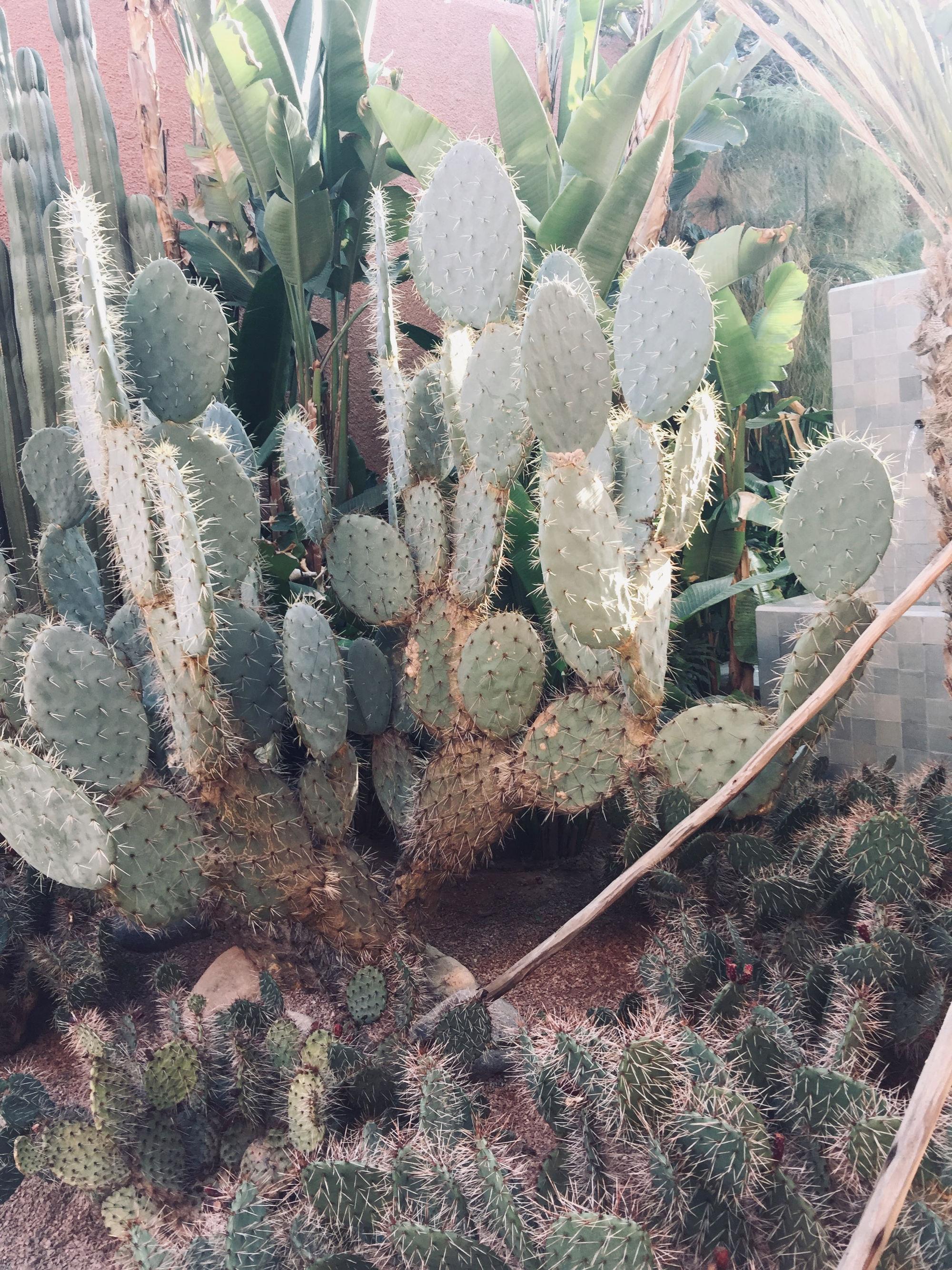 Sehenswürdigkeiten Marrakesch: Gärten - Kakteen
