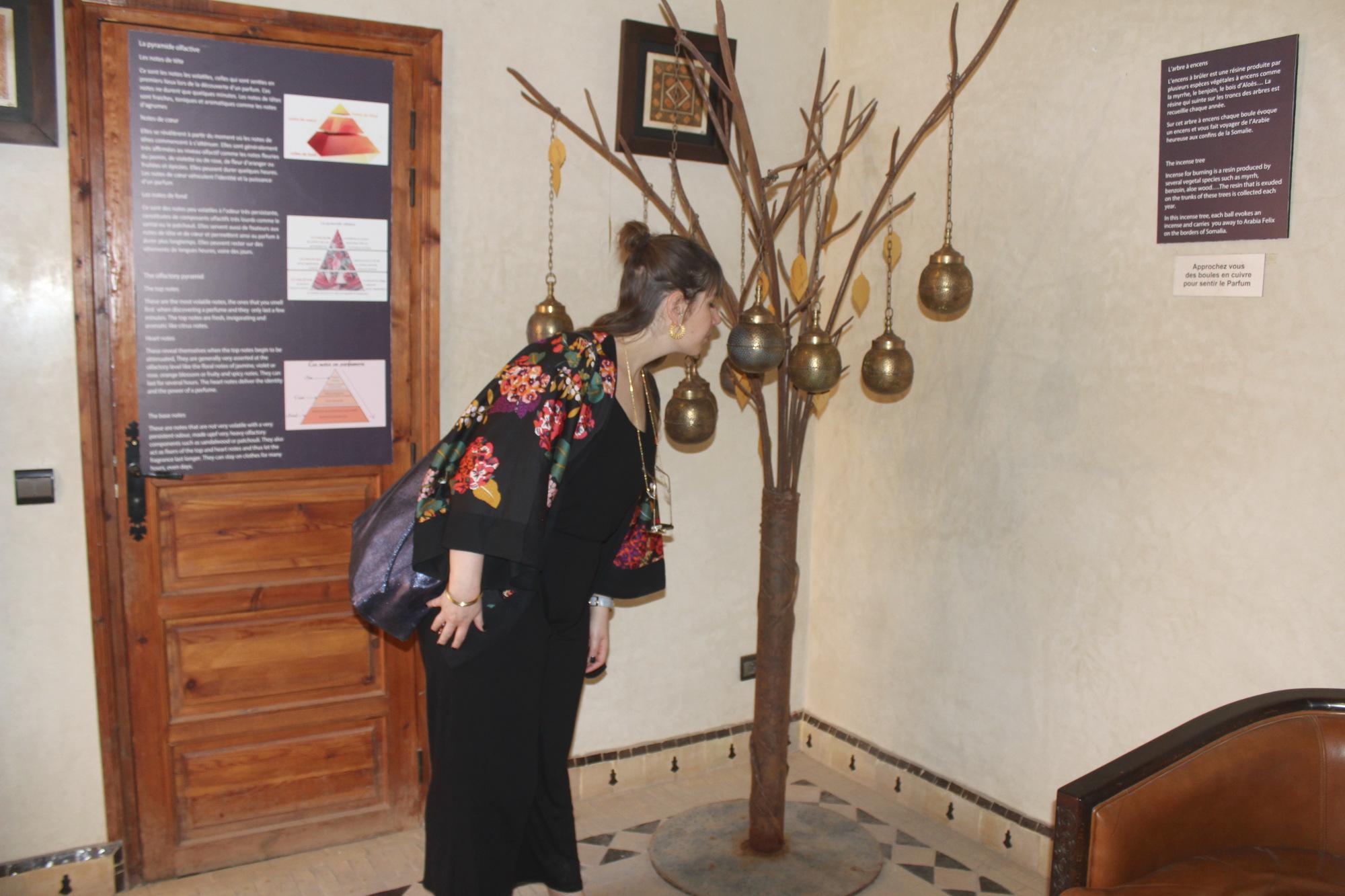 Sehenswürdigkeiten Marrakesch: Musée du Parfum Marrakesch Schnupperbaum