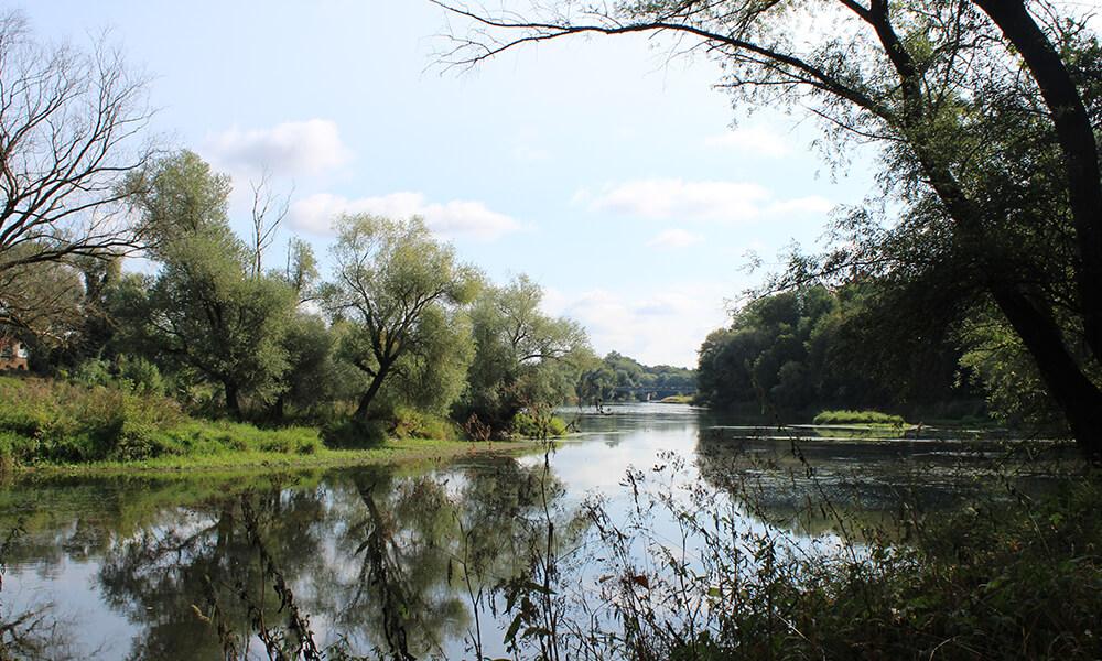 Blick auf Donau im Grünen