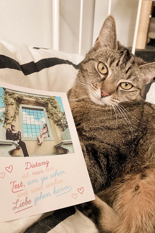 Katze und selbstgestaltete Solidaritätspostkarte von MyPostcard