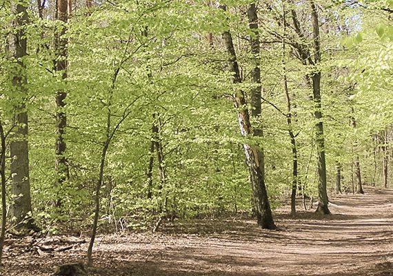Waldweg im Grunewald
