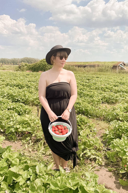 Erdbeeren selbst ernten
