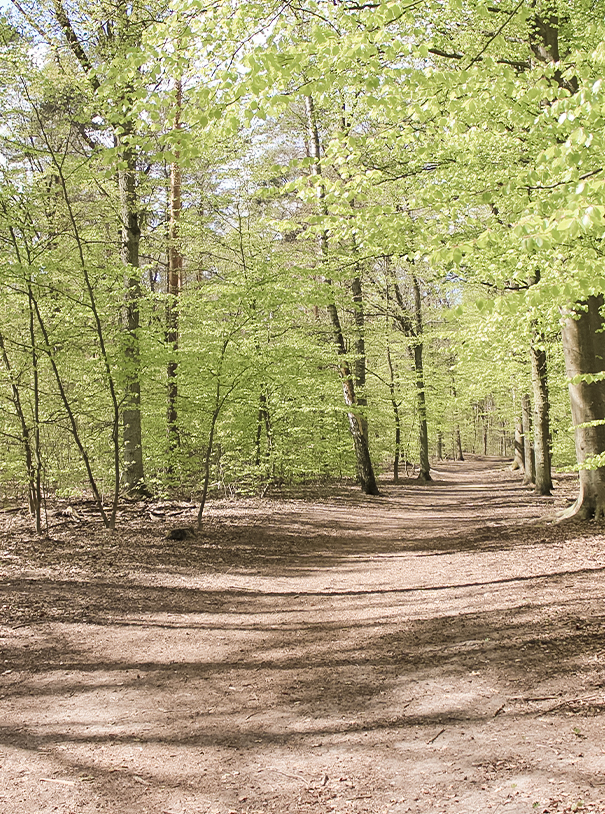 Wanderweg im Grunewald