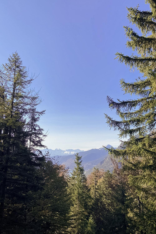 Ausblick über den Wald des Jochbergs