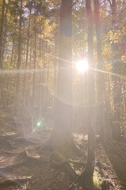 Lichtspiel im Wald am Jochberg