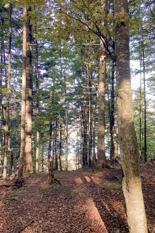 Wald am Jochberg