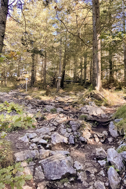 Felsiger Wanderweg durch den Wald am Jochberg