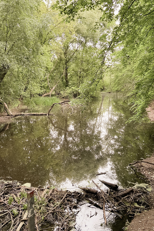 Wasserlauf Tegeler Fließ