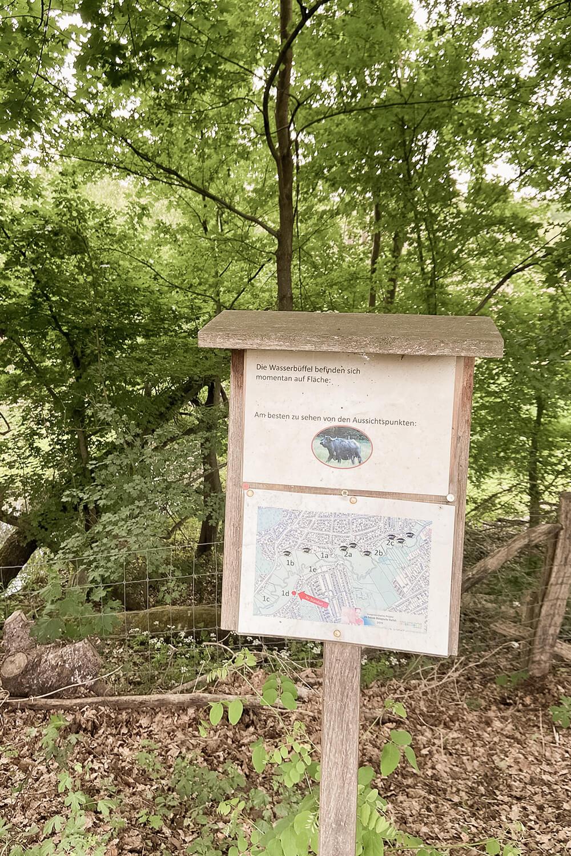 Beobachtungspunkt Wasserbüffel Tegeler Fließ