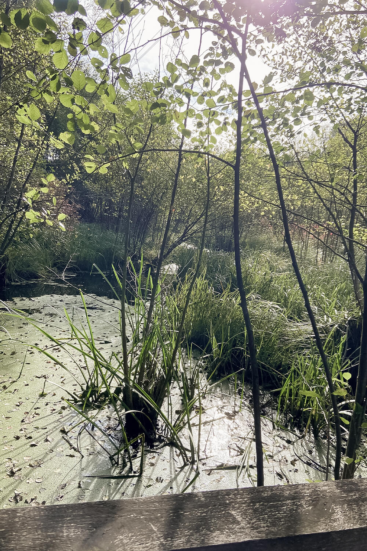 Blick in den Sumpf im Briesetal