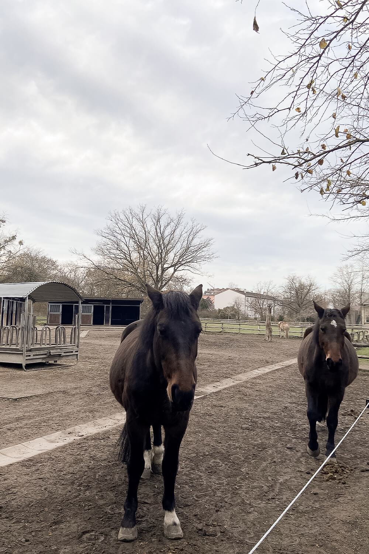 Pferde am Gutshof Britz
