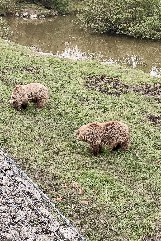 Bären im Wildpark Poing