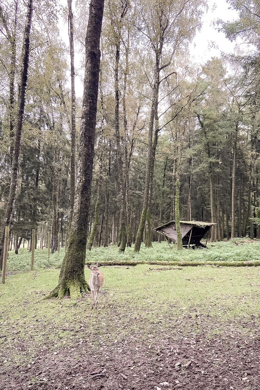 Dammwildgehege im Wildpark Poing