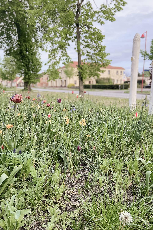 Blumenwiese in Beelitz