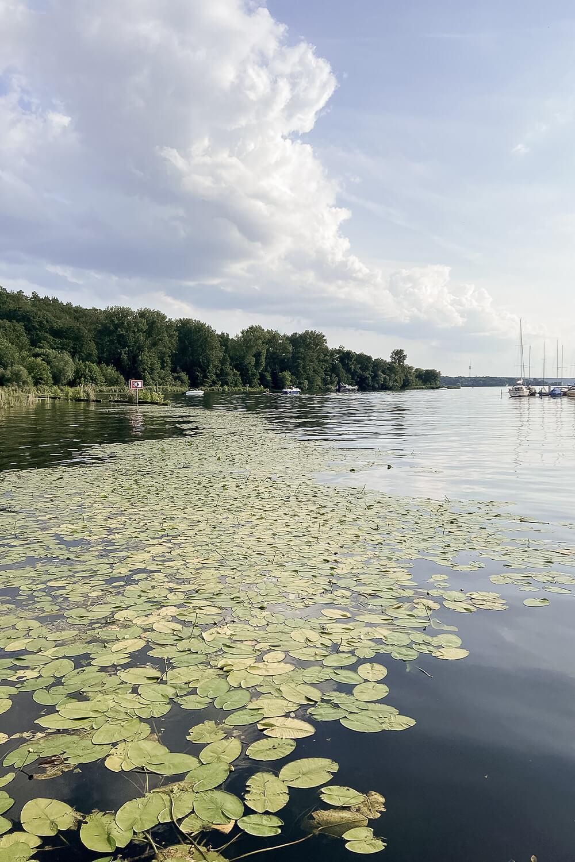 Uferblick auf Yachtclub auf der Insel Lindwerder