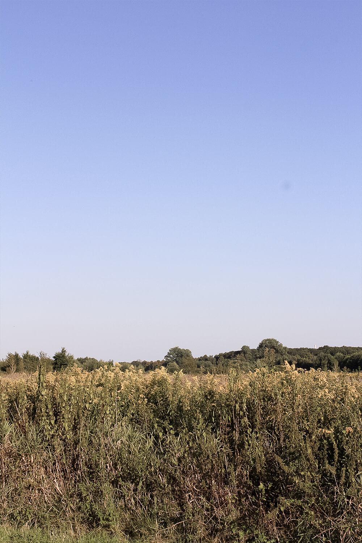 Naturschutzgebiet Lippeauen in Hamm