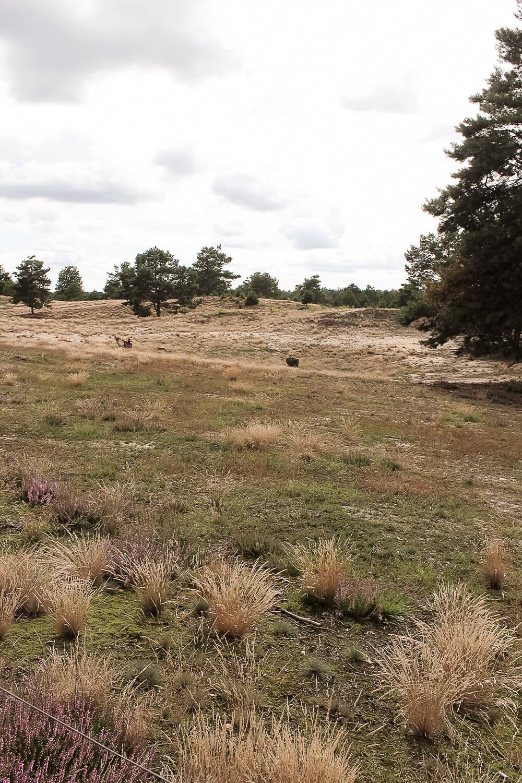 Blick vom Aussichtshügel auf die Heidelandschaft in der Schönower Heide
