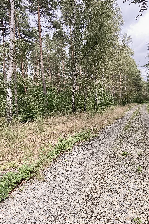 Waldwanderweg in der Schönower Heide