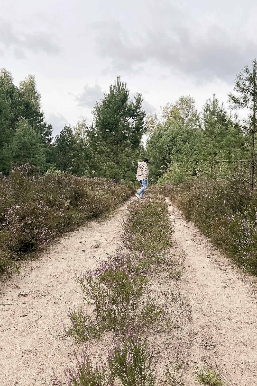 Wanderweg in der Schönower Heide