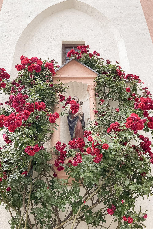 Rosen an Frauenkirche in Schrobenhausen